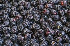 Blackberries. Background from fresh and juice blackberries Royalty Free Stock Image
