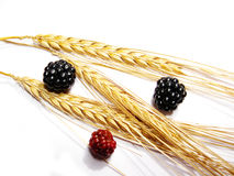 Blackberries and barley Stock Photos