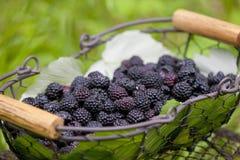 Blackberries in basket stock photos