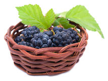 Blackberries in a basket Stock Photos
