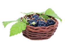 Blackberries in a basket Royalty Free Stock Image