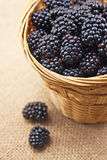 Blackberries in basket Royalty Free Stock Image