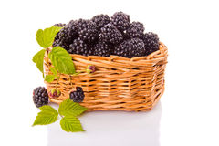 Blackberries in the basket. Blackberries in a wicker basket on a white background Royalty Free Stock Images
