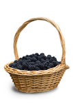 Blackberries in the basket Royalty Free Stock Photography