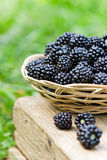 Blackberries in the basket Royalty Free Stock Photos