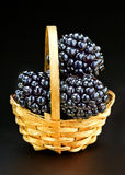 With blackberries basket Royalty Free Stock Photos