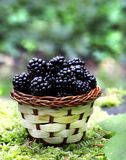 Blackberries basket Stock Images