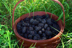 Blackberries in a basket Royalty Free Stock Photos