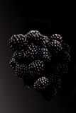 Blackberries on black. Stock Photography