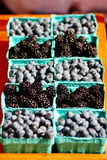 Blackberries and blueberries glistening in the sun at the Cahrleston, SC Farmer's Market. Royalty Free Stock Images