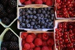 Blackberries blueberries raspberries red currants Stock Image