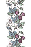 Blackberries border Royalty Free Stock Images