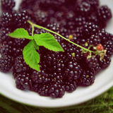 Blackberries, brambles Stock Photography