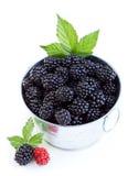 Blackberries in a bucket Stock Image