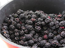 Blackberries in a casserole Stock Images