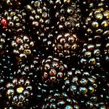 Blackberries. Stock Photos