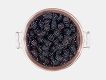 Blackberries in Copper Colander Stock Image