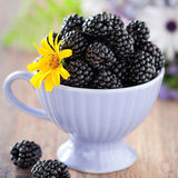 Blackberries Royalty Free Stock Image