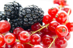 Blackberries and currants Stock Images