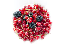 Blackberries and currants Royalty Free Stock Photos