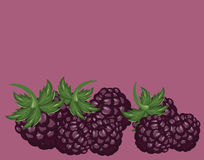 Blackberries delicious dessert background Royalty Free Stock Image
