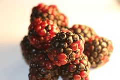 Blackberries isolated that look juicy and ripe. Blackberries are from the Rubus genus in the Rosaceae family Stock Image