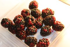 Blackberries isolated that look juicy and ripe. Blackberries are from the Rubus genus in the Rosaceae family Royalty Free Stock Image