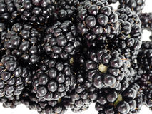 Blackberries in detail Stock Photography