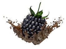 Blackberries dipping into chocolate with splashes Royalty Free Stock Photography
