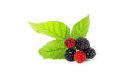 Blackberries. Fresh blackberries  isolated on white background Royalty Free Stock Photo