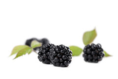 Blackberries Royalty Free Stock Photo