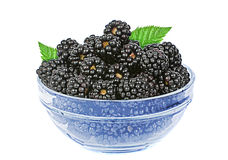 Blackberries fruits Stock Photos