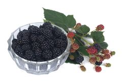 Blackberries in a glass bowl with a branch  Royalty Free Stock Images