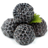 Blackberries with Green Leaf Close-Up Isolated on White Background Royalty Free Stock Photography