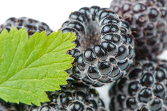 Blackberries with Green Leaf Close-Up Royalty Free Stock Photography
