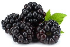 Blackberries with green leaf isolated on white background. macro Stock Photo