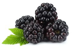 Blackberries with green leaf isolated on white background. macro Royalty Free Stock Images