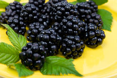 Blackberries with green leaves Royalty Free Stock Image