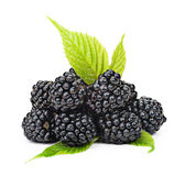 Blackberries with green leaves isolated on white background. Stock Image