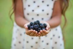 Blackberries hands full Stock Photo