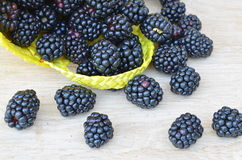Blackberries in his basket Royalty Free Stock Image