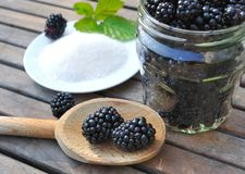 Blackberries for homemade jam Stock Image
