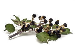 Blackberries II Royalty Free Stock Photos