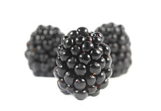 Blackberries isolated Stock Image