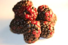 Blackberries isolated that look juicy and ripe. Blackberries are from the Rubus genus in the Rosaceae family Stock Photo