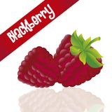 Blackberries isolated white background Royalty Free Stock Images