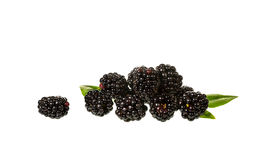 Blackberries isolated Royalty Free Stock Photos