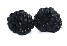 Blackberries isolated on white Royalty Free Stock Image