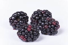 Blackberries isolated Royalty Free Stock Photo