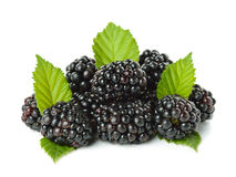 Blackberries isolated on white background Royalty Free Stock Image